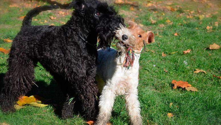 promociones-peluqueria-canina