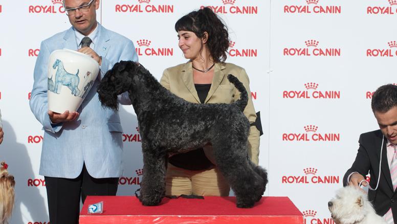 exposicion-canina