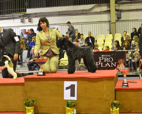 cursos de peluquería canina Madrid