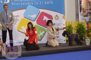 peluquería canina Madrid Alcorcón - Cursos