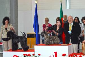 Peluquería Canina Madrid - Curso peluquería perros
