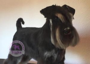 corte de pelo para perros en madrid